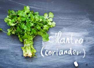 Cilantro: How to Use, Cook & Store